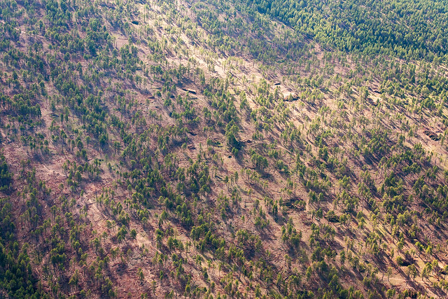 Aerial view of Zuni Mountain Collaborative Forest Landscape Restoration project