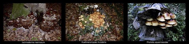 Waldbaumpilze
