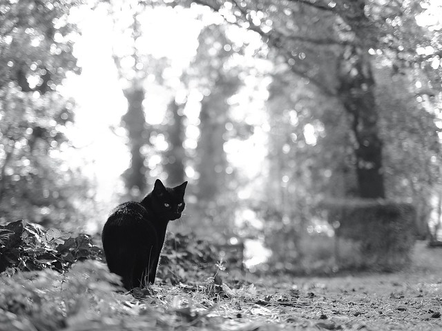 Black Cat on a Cemetery