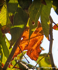 Leaves...  (由  HLHullPhotography