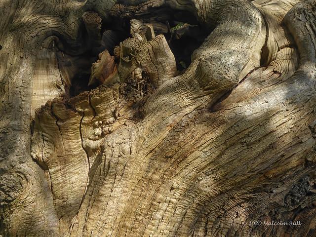 Tree Texture - Buckingham Park