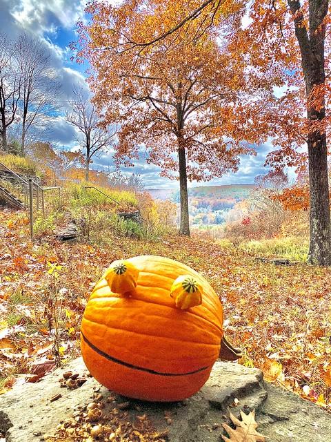 Rupert Pumpkin Oak 'n' Sky