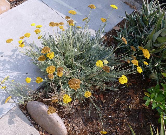 corona exercise walk: plant / flower 10-20