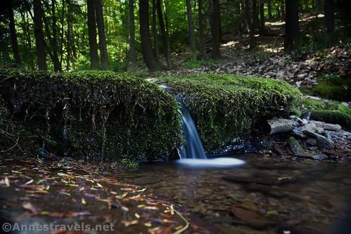 Tiny little waterfall in Naval Run, Tiadaghton State Forest, Pennsylvania