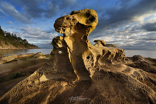 'Petrified Rex' Gulf Islands,BC | by Gavin Hardcastle - Fototripper
