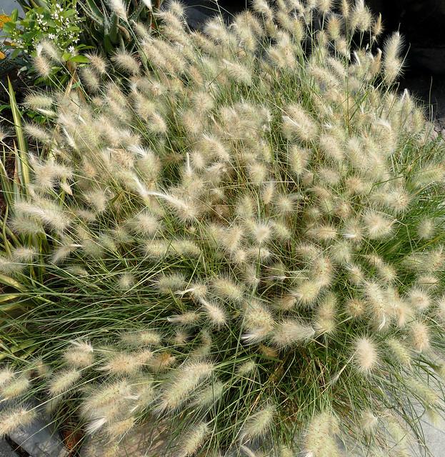 corona exercise walk: plant / flower 10-20*