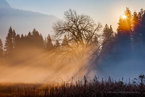 Warm Sun Rays in Yosemite Valley