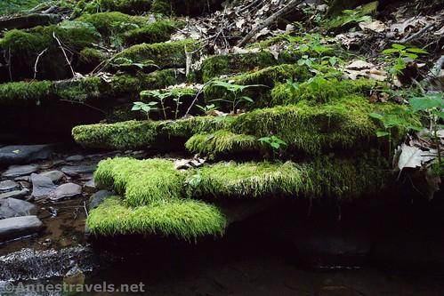 Mossy rocks along Naval Run, Tiadaghton State Forest Pennsylvania