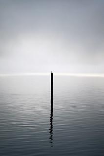 Gull on a Pole in the Fog