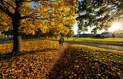 Uppsala, October 23, 2020