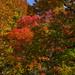 A Leafy Impression