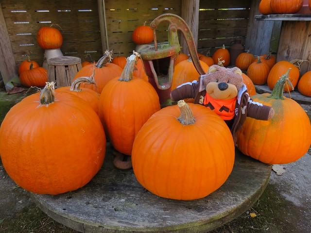 Pumpkin Teddy Tedaloo