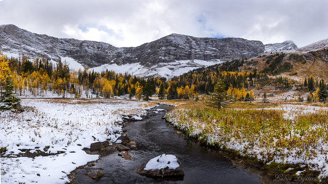 Fall colors covered with snow 3