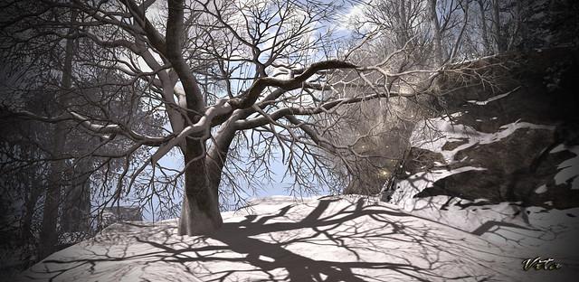 Snowy hill ❄️⛄️❄️