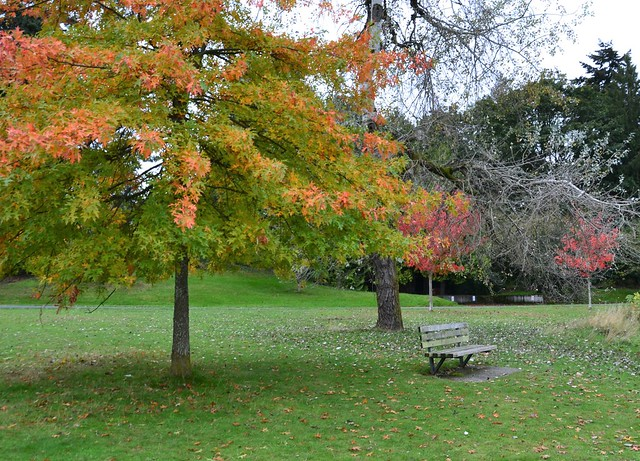 Seward Park DSC_04421
