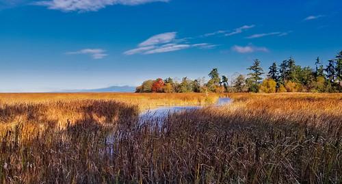 saltmarsh reifelbirdsanctuary reifel delta ladner bc canada steveston martinsmith ©martinsmith landscape fraserriver samsunggalaxys8 westhamisland