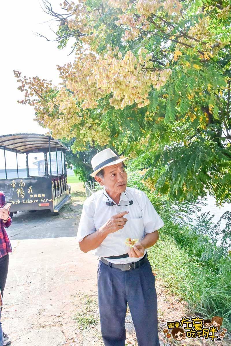 台南鴨莊 田媽媽 台南親子旅遊景點-130