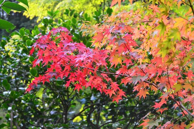Bright Branch by Nina