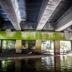 North Edisto from Rowes Bridge to Kill Kare