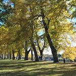 Tree shadows in Avenham Park, Preston