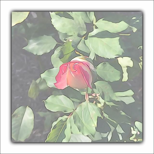 Rosebud (highly edited)