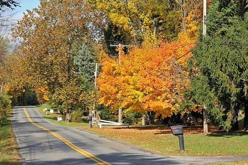road autumn autumncolors autumnphotography autumnfoliage autumncolor fallfoliage fall fallcolors fallfoliagephotography fallphotography twinlakesohio ohio gold goldleaves earlvilleohio