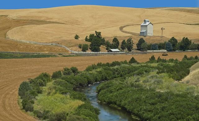 Wheat Farm River Bend 5844 B