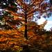 "<p><a href=""https://www.flickr.com/people/julesfoto/"">JulesFoto</a> posted a photo:</p>  <p><a href=""https://www.flickr.com/photos/julesfoto/50522972446/"" title=""UK - London - Kew - Kew Gardens - Tree - Autumn colour""><img src=""https://live.staticflickr.com/65535/50522972446_862564ac65_m.jpg"" width=""240"" height=""180"" alt=""UK - London - Kew - Kew Gardens - Tree - Autumn colour"" /></a></p>  <p>October 2020.<br /> Visit to Kew Gardens to see Autumn colour.</p>"