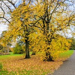 Autumn leaves at Haslam Park, Preston