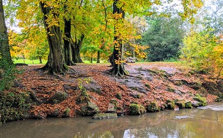 Brook bank Autumn in Haslam Park | by Tony Worrall