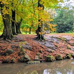 Brook bank Autumn in Haslam Park
