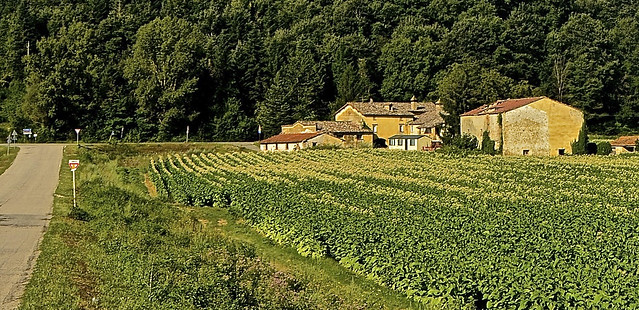 Montecorona : The farmhouse of a farmer from the Badia ,with the white tobacco ( Bright ) field in front of the house .