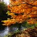 "<p><a href=""https://www.flickr.com/people/julesfoto/"">JulesFoto</a> posted a photo:</p>  <p><a href=""https://www.flickr.com/photos/julesfoto/50523154992/"" title=""UK - London - Kew - Kew Gardens - Autumn colour""><img src=""https://live.staticflickr.com/65535/50523154992_dd8f49eb88_m.jpg"" width=""240"" height=""180"" alt=""UK - London - Kew - Kew Gardens - Autumn colour"" /></a></p>  <p>October 2020.<br /> Visit to Kew Gardens to see Autumn colour.</p>"