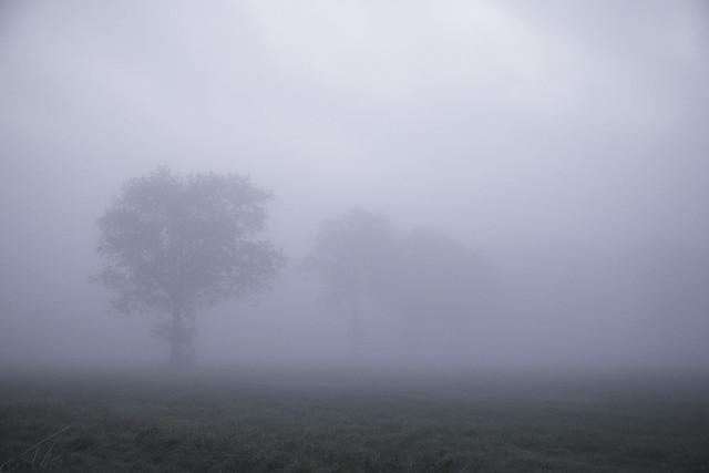 Nature's minimalism