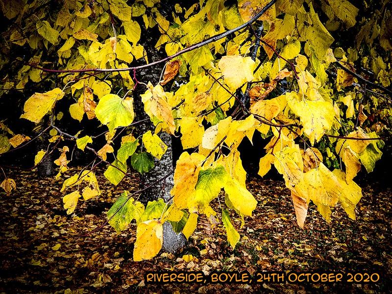 Autumn Leaves, Riverside