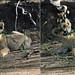 07 SOUTH AFRICA KAPAMA-051
