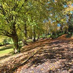 Autumn path in the park