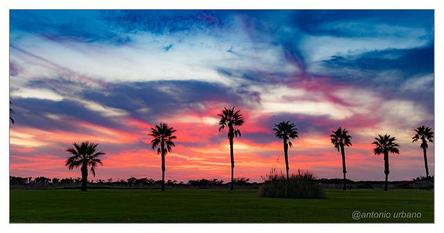 Atardecer en la paseo de las palmeras. // Sunset in the palm park.