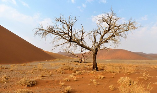 Namibia: one of the better-known single trees in Namibia