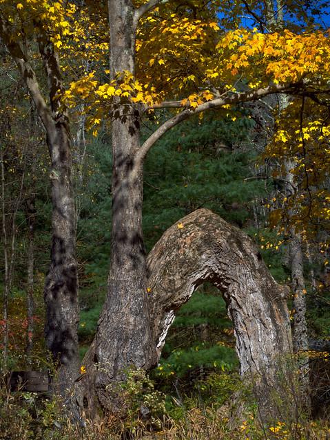 Arch Tree