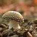 Macro Mushrooms_00089