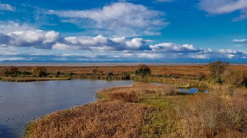 reifelbirdsanctuary westhamisland delta ladner salishsea martinsmith ©martinsmith bc canada landscape