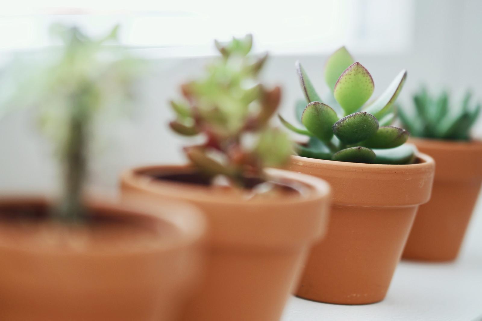 viherkasvit-blogi