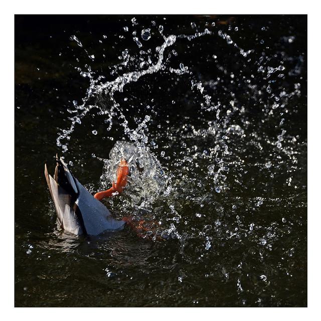splash.....