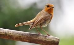 """Anche gli uccelli """"pensano"""""""