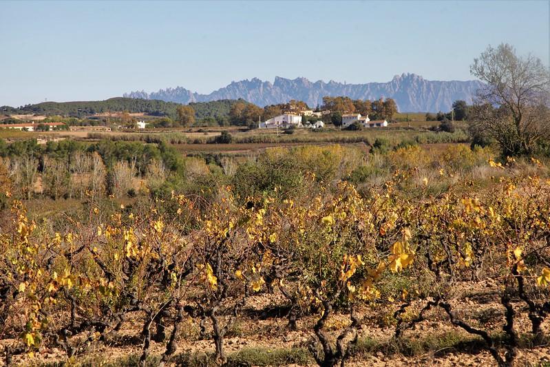Vinyes de Font-rubi, Alt Penedès
