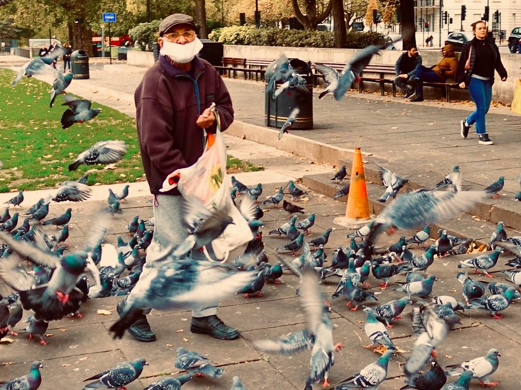 Feeding the pigeons.