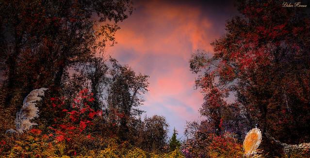 Forêt d'automne en Haute-Savoie