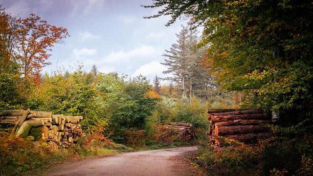 Rekowo forest