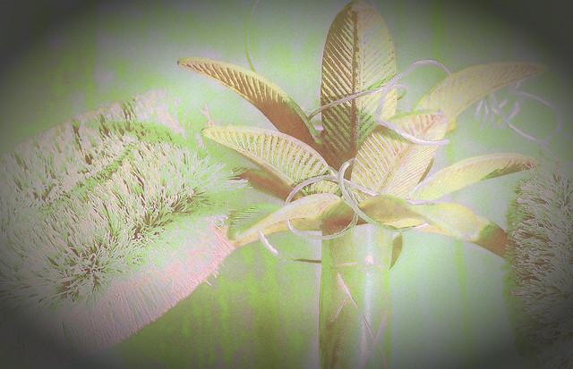 palmtreebrushes